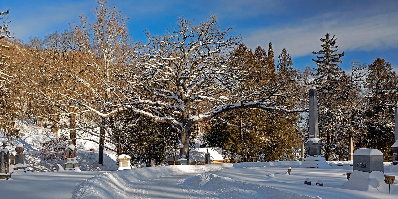 woodlawn-cemetery-winter-06
